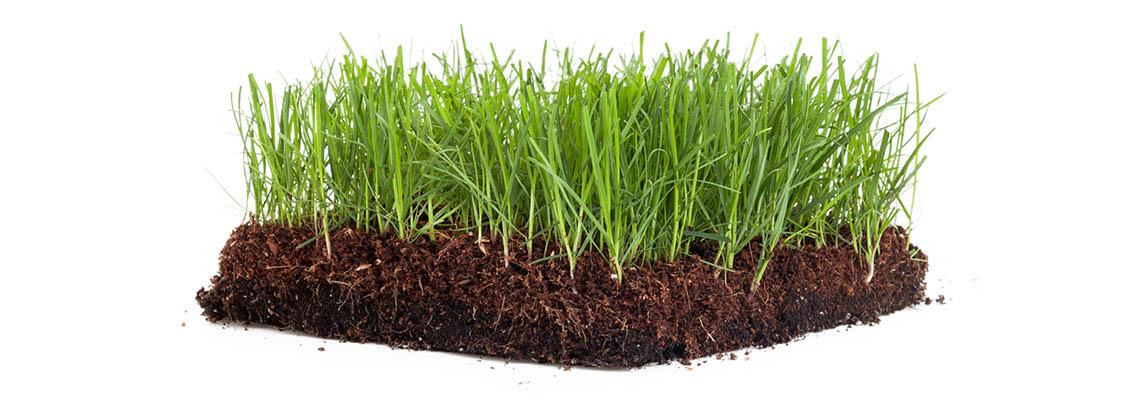 Turf Ayrshire | Turf Supplier Ayrshire | Macpherson Lawn Turf